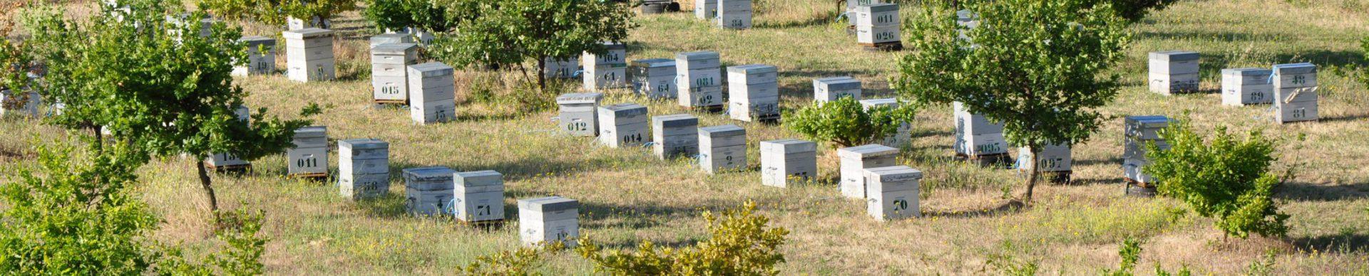 Il miele alveari nei pressi di un campo di lavanda Valensole