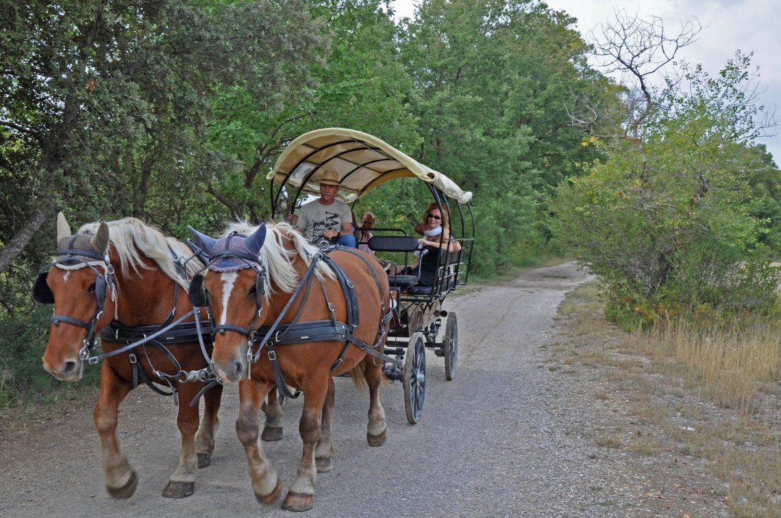 Circuito in carrozza da Forcalquier alla Montagna di Lure