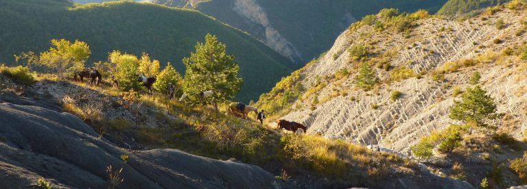 Route Napoléon à cheval labellisée « Grand Itinéraire Équestre »