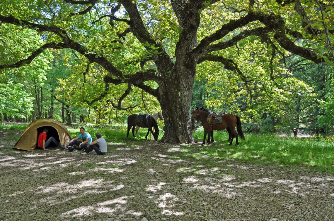 Itinerari equestri La route du Hussard Alta Provenza Haute-Provence Luberon