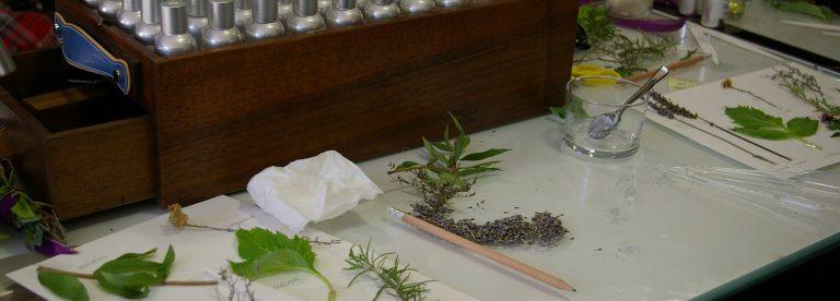 Piante ed erbe aromatiche UESS